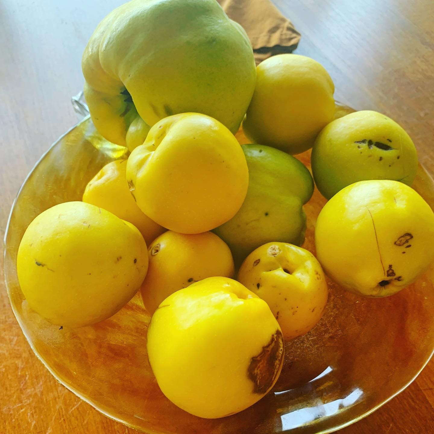 """It is QUINCE Season, friends (rich in #feedyourgutbrain pectin ❤️). Pictured here, some are free, courtesy of neighbors. Some are paid for @portlandfarmers market. All are perfect 😍. You don't have to """"get fancy"""" with quince. If you never used it before, just throw it in with the apples when making apple sauce❤️. When made with quince, it will go further to #feedyourgutbrain❤️. Because #shortchainfattyacids 😍."""