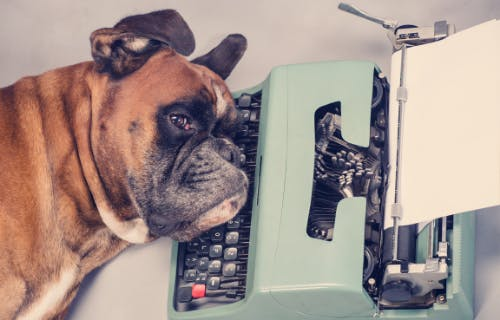 Here's a fundraising dog laying her head on a typewriter. Writer's block.