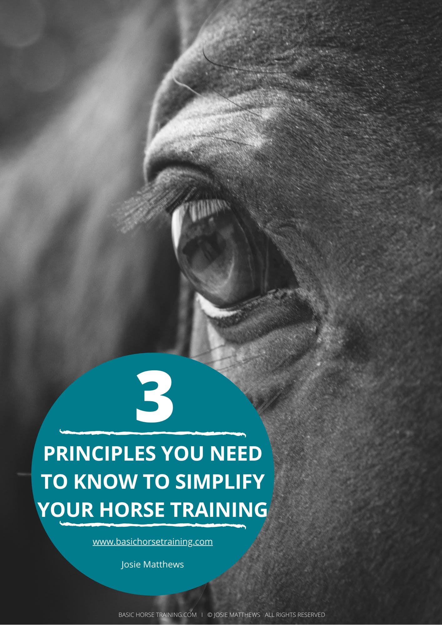 3 Principles to Train Your Horse