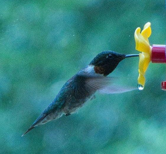Hummingbirds and small businesses