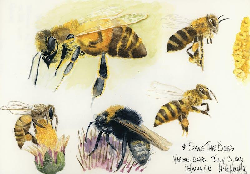 Watercolor pbeesainting of bees