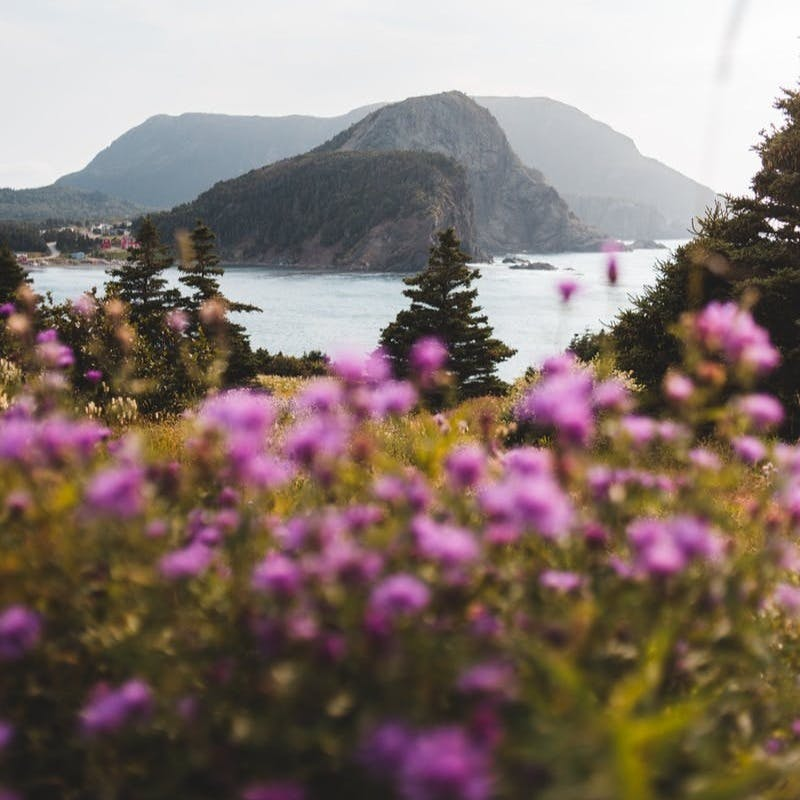 purple flowers near lake and mountains during daytime