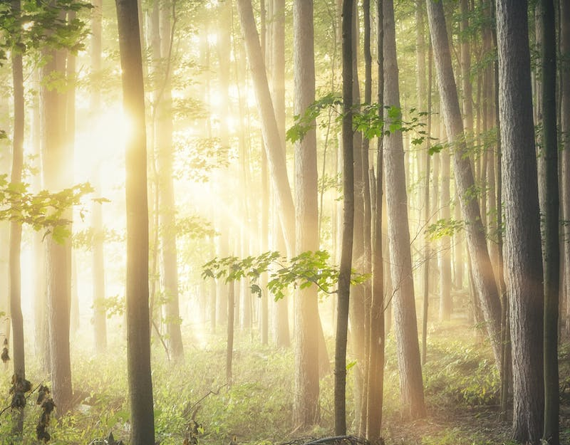 a beautiful photo of trees showing the health benefits of getting outside in nature