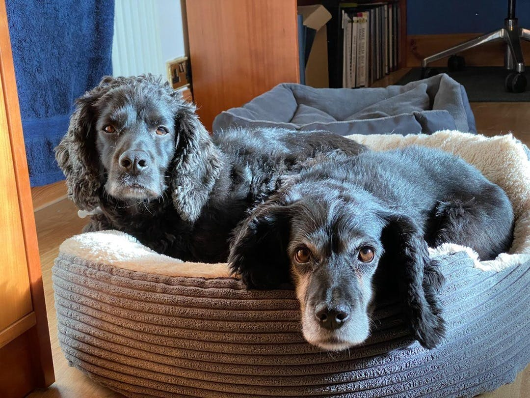 Seems hard to believe that Midge has been with us for three years now.     Every day she brings us all so much love and joy.     And all thanks to an unexpected post in a Facebook Group - thank you @Craig Cantwell.     The moral - you never know what good is going to come your way or when or where from.
