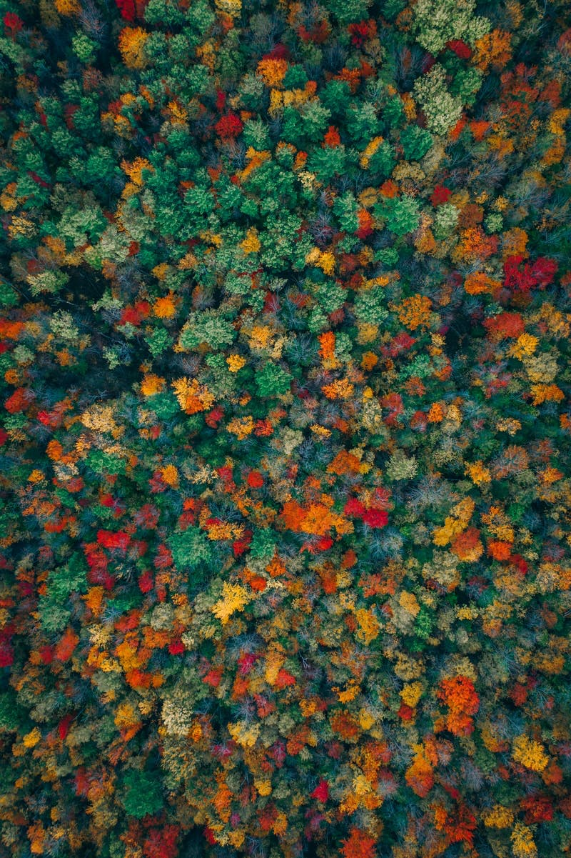 An aerial view of the autumn colors.